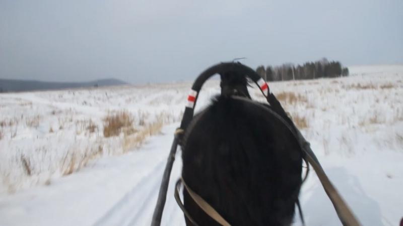 Катание на лошадке в санях