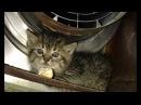 Девушка спасла очень сердитую маленькую кису отогрела её и пробудила любовь в кошачьем сердце