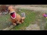 ГИГАНТСКИЙ НАДУВНОЙ КОСТЮМ ДИНОЗАВРА Битва t-rex и Бластер НЕРФ (Nerf) Dinosaurs GIANT LIFE SIZE