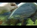 Аэлифтная помпа для фильтра своими руками аэрлифтный фильтр для аквариума
