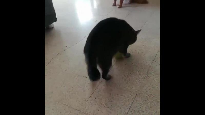 Push the cat · coub, коуб