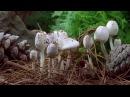 La pousse impressionnante de champignons en timelapse