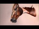 Portrait malen lassen Pferdeportrait ohne Raster Projektor Aquarell Pferd von Jana Noreen Germer