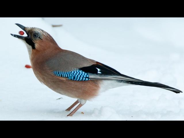 Какие птицы пользуются кормушками?