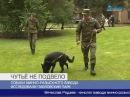 Завершение работы сапёров в Павловском парке