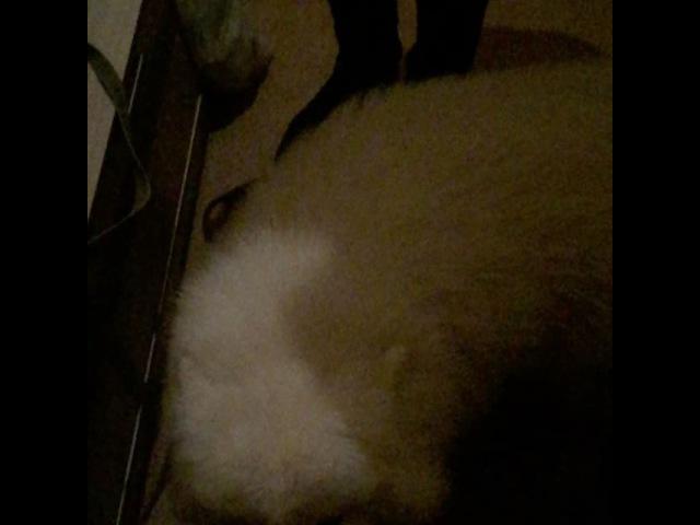 Lazarev_blea video