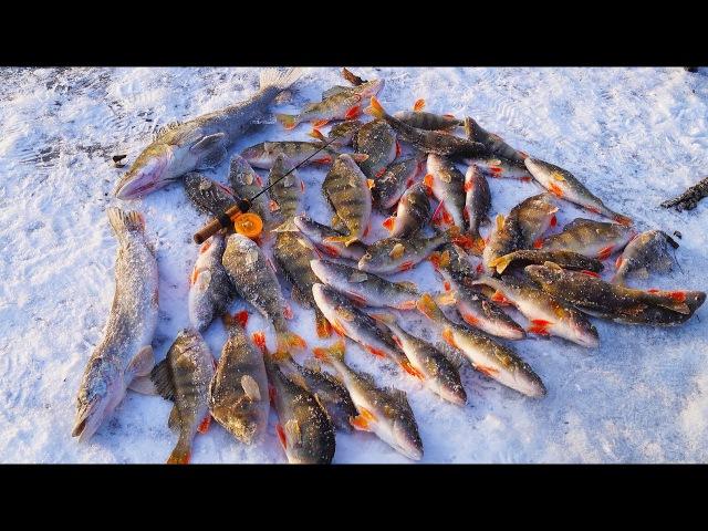 Крупный окунь на реке по первому льду! Зимняя рыбалка 2017, ЛОВЛЯ ОКУНЯ на БАЛАНСИР, первый лед 2017