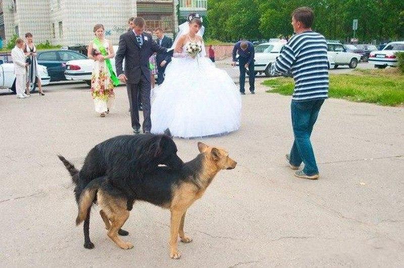 Смешные и странные фото с русских свадеб. (35 фото)