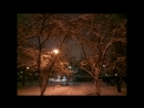 прогулка по яблоневому саду. 31.01