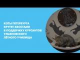 Коты Петербурга крутят хвостами в поддержку курсантов ульяновского лётного училища