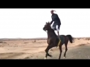 Arap atı uçak