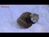 Милые Смешные Животные и Снег! Animals And Snow