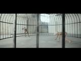 Sia ft. Shia LaBeouf - Elastic Heart (Maksim Nikolaev Rock cover)