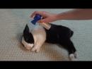 Разбудил спящего кролика гудком (VHS Video)