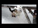 наш любимчик рад снежку , как ребёнок ))