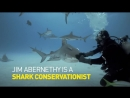 Акулы - дружелюбные, как собаки. /Sharks Love To Be Petted - Theyre Like Dogs/