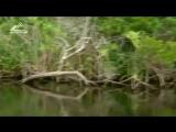 Знакомство с гигантский аллигатором. Документальный фильм