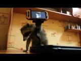 Пока Фаня изучает телефон, закадром Лилу играет с Дашей. Даша не енот))) Даша человеческий детеныш)))