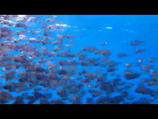 Подводный мир Montazah Ras Nasrani