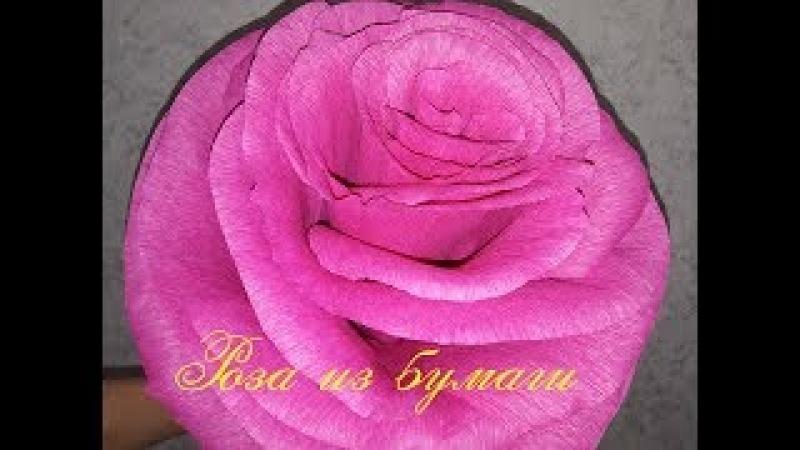 Роза из бумаги. Большая бумажная роза из гофрированной бумаги.