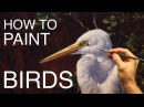How To Paint Birds EPISODE THREE - The Egret and Brahminy Kites