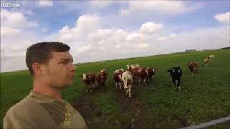 Призыватель коров