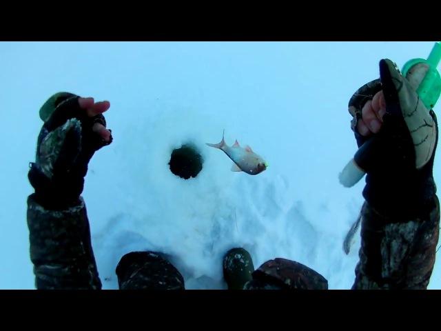 Зимняя рыбалка. Отборная сорога и подъязки. Река Трыль-Яха. 11.12.2017