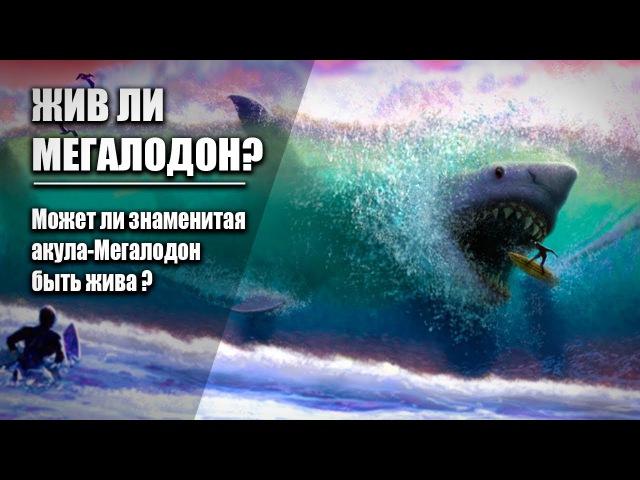 ЖИВ ЛИ МЕГАЛОДОН? Может ли мегалодон существовать в нашем океане?