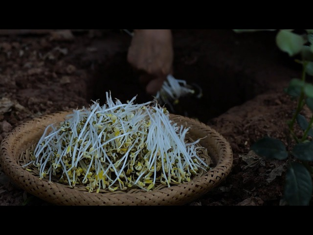 Long, tender and fresh: bean sprouts are nutritious and pollution-free.(又长又嫩又新鲜,这样种豆芽才能保证营养无公害