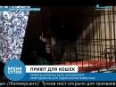 Приют для животных вне закона