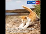 А вы знаете, кто первым пройдет по Крымскому мосту?