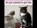 We were holding our breath as this cat tried to pet a bird. Spoiler Were s...