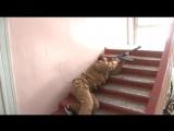Эффектный и функциональный спуск с лестницы