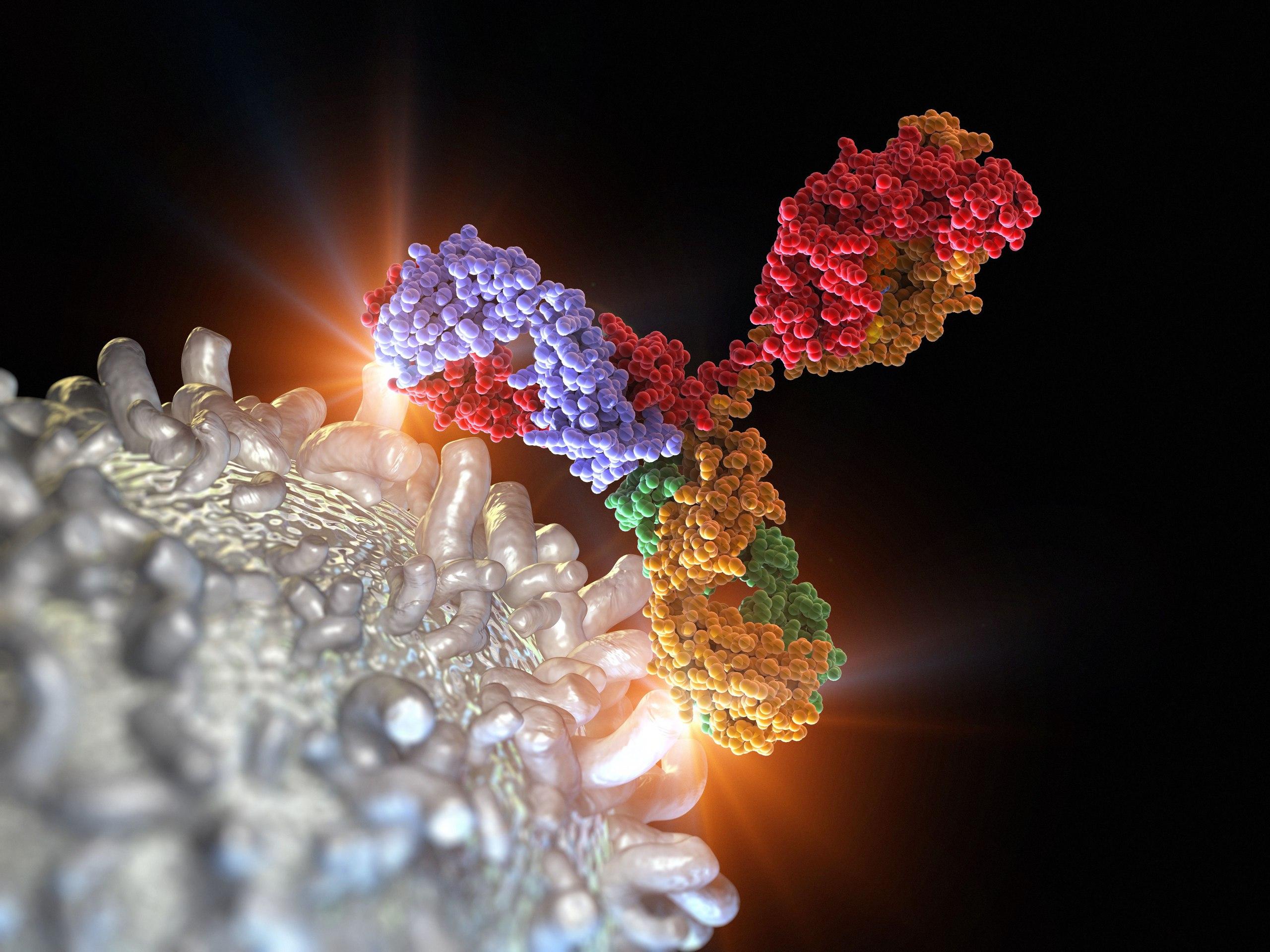 Антитела в онкологии