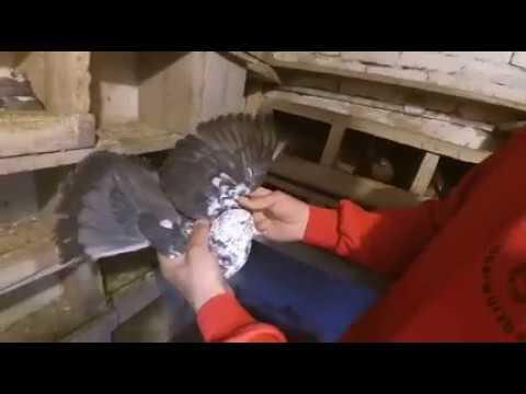 николаевские торцовые голуби Рогач С.Н город Балта часть 2