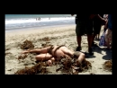 Тело на пляже — Смертельное оружие 1х2