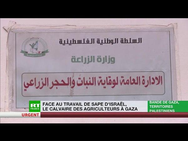 L'armée israélienne pulvérise des pesticides sur la zone tampon avec Gaza lagriculture en péril