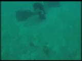 люди ныряли с аквалангом в Южной Америке и наткнулись на какое-то сокровище_cut