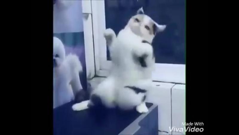 кот зажигает