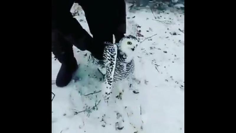 Сова забрела к охотникам