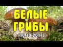 Сбор белых грибов (10.10.2017). Как быстро найти белые грибы. Поиск боровиков в дубовом лесу