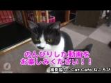 STORYTELLER情報 - - ストテラTV更新しました - - 昨年開催された幕張メッセ公演でのストテラメンバー賞 - Nobと猫カフェの様子を公開 - -