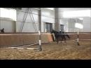 Akhal teke stallion Shahin Ахалтекинский жеребец Шахин