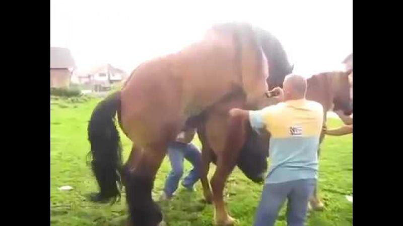 Спаривание коня и лошади 18 эротика порно Эротика, Сексуальные девушки, Голые, Красивые, Интим, Тверк