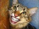 Приколы с Кошками Смешное Видео Про Котов 100 позитив