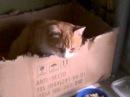 Кот грызет коробку Cat gnaws a box