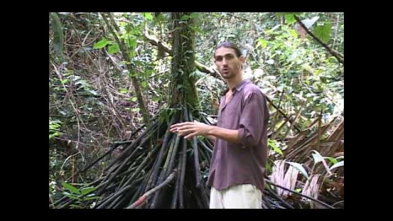 Luna Nueva Farm Costa Rica walking palm tree