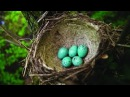 National Geographic Documentary Amazing Animal Homes how animals live Nature Documentary 2016
