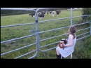 Grace Lehane playing to the cattle in Kilmichael Cork (Sharon Shannon style)