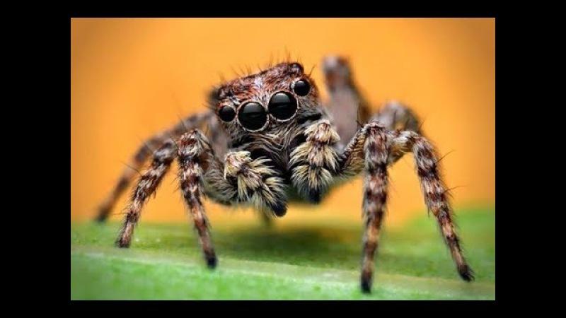 Komik Örümcek Saldırısı 😮